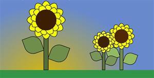 css3+js向日葵长大开花动画
