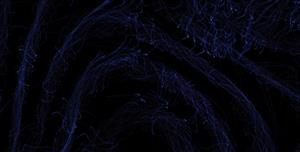 canvas网页流动特效代码